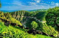 جنگل های پیرانشهر به مدت یک ماه محلول پاشی می شود