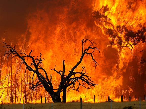 اشد مجازات برای آتش افروزان جنگل ها