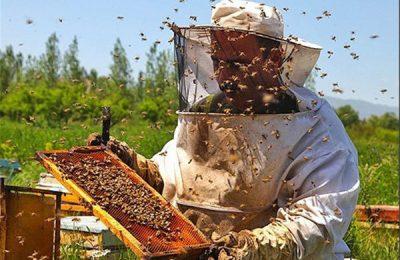 عسل آذربایجان غربی از تولیدات آذربایجان غربی