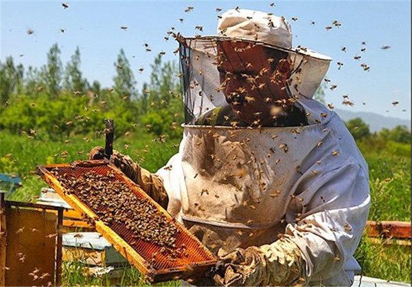 تولید ۱۱۰۰ تن عسل در اشنویه