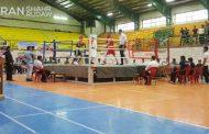 برگزاری مسابقات بوکس قهرمانی جوانان استان در پیرانشهر