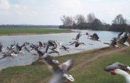 دستگیری ۲ شکارچی پرندگان در میاندوآب