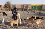 سایت نگهداری سگ های بی سرپرست در مهاباد راه اندازی شد