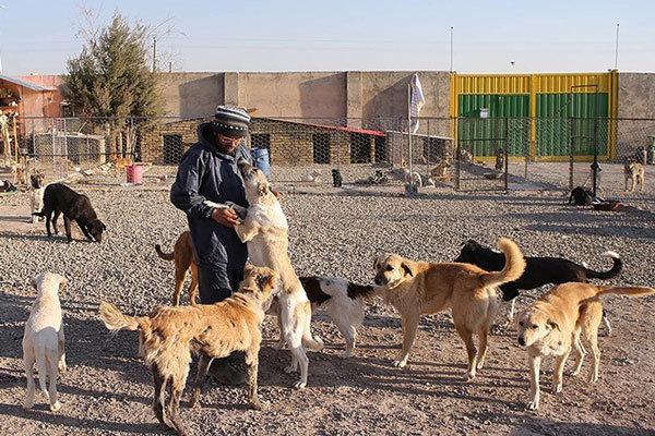 5 هزار قلاده سگ علیه بیماری هاری در آذربایجانغربی واکسینه شدند