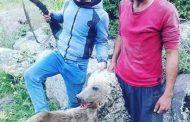 شناسایی عاملین انتشار عکس کشتار خرس در ماکو